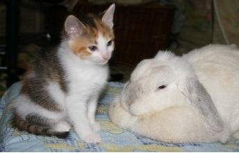 猫とウサギを一緒に飼うときのポイント